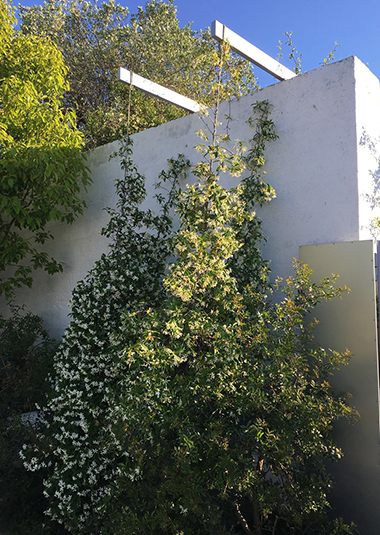 """Studio Talent: Giardini interclusi da mura in tufo scialbati a calce arricchiscono le corti di una piccola struttura ricettiva. Essenze rigorosamente autoctone e profumate (fico, limone, melograno...salvia, rosmarino, timo, gelsomino) costituiscono il vero """"arredo"""" del complesso."""