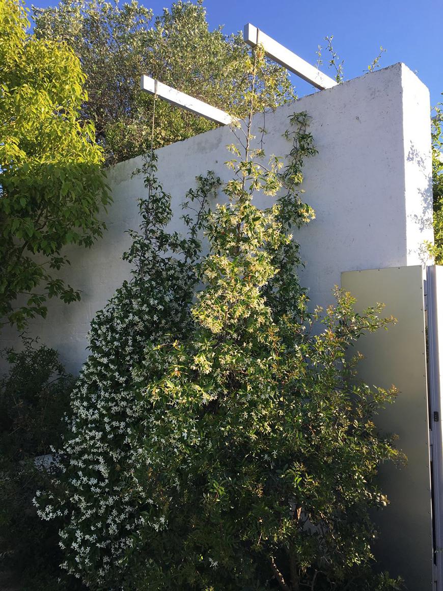 Studio Talent: Giardini interclusi da mura in tufo scialbati a calce arricchiscono le corti di una piccola struttura ricettiva. Essenze rigorosamente autoctone e profumate (fico, limone, melograno...salvia, rosmarino, timo, gelsomino) costituiscono il vero