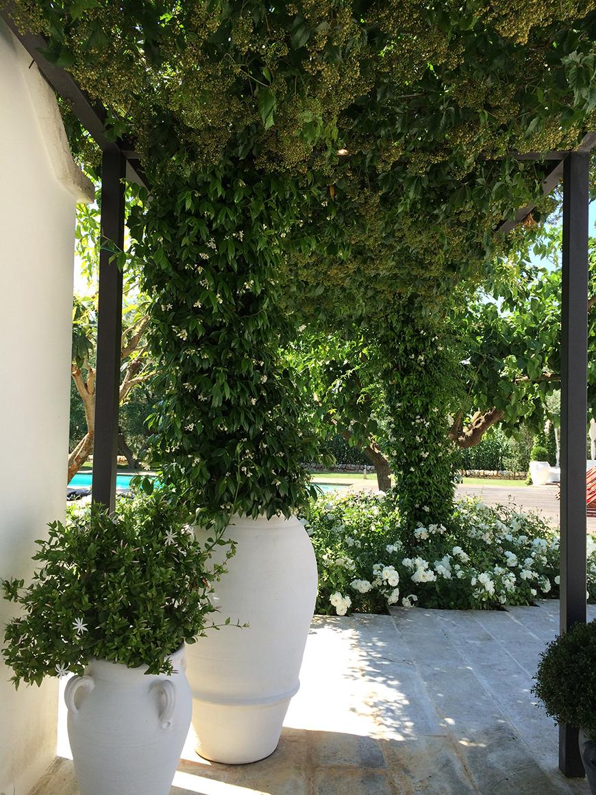 Studio Talent:Un grande giardino avvolge un complesso di trulli nella campagna di Ceglie M.ca. Il verde diviene elemento architettonico: rampicanti per le zone, un ampio canneto circonda la piscina, un roseto nella zona più intima della casa, spezie ed essenze profumate intorno alla cucina. una sorta di